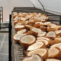 Coconut-Drying